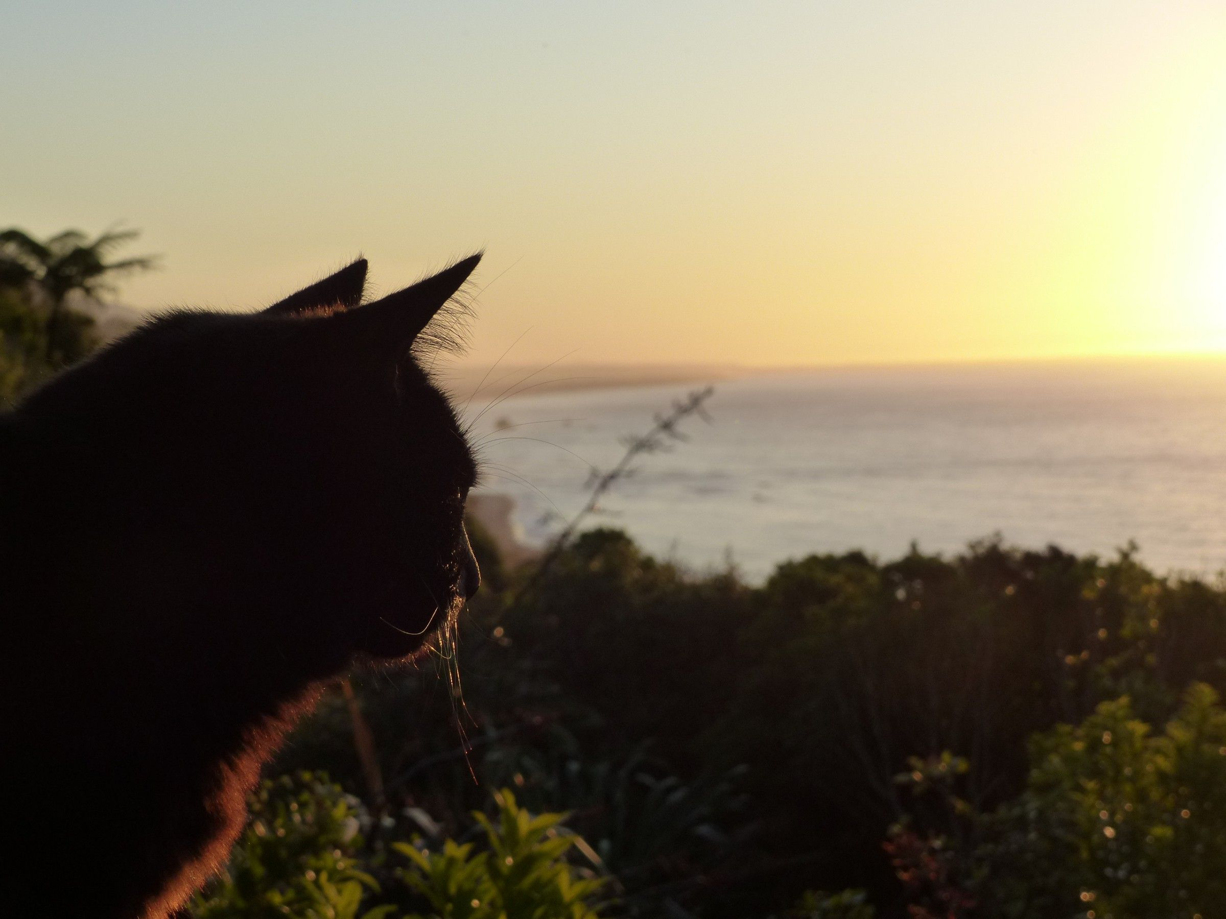 Cat at sunset at the Old Slaughterhouse